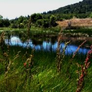 Mitigation, Restoration, & Planning